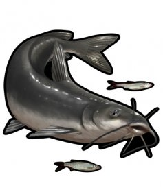 Channel Catfish Mega Decal